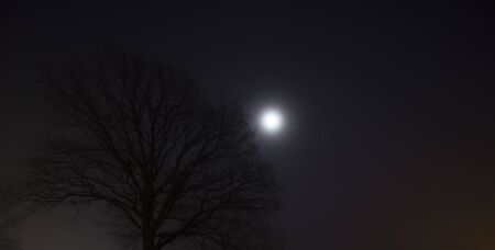 Tree without the leaves standing in the fog, dark evening, with the moon shining