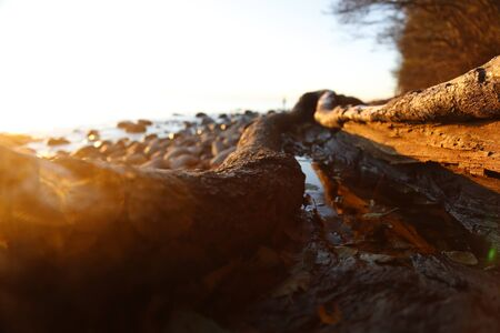 Closeup of Old tree trunk on the beach filled with water during the sunshine, sunrise on the beach