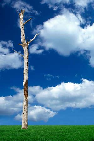 arbre mort: Dead Tree Banque d'images