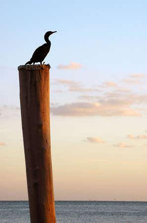 Bird on pole - bird sitting on wooden pole relaxing at sunset photo
