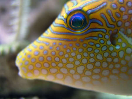 Tropical Fish - closeup of the fron of a tropical fish Stock Photo - 411793