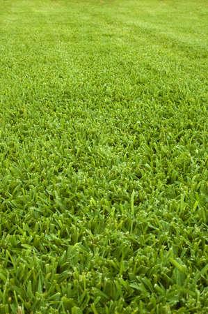 Freshly cut green lawn Stock Photo