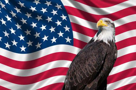 bald eagle: Patri�tico s�mbolo que muestra la bandera de Estados Unidos con un �guila calva Foto de archivo