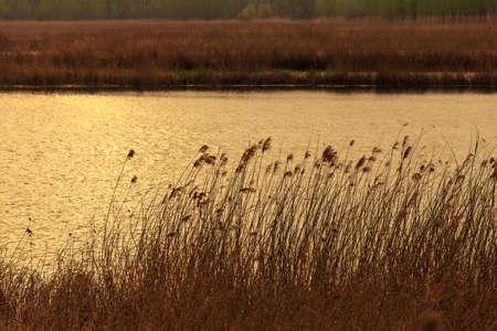 canne: Canne Lakeside