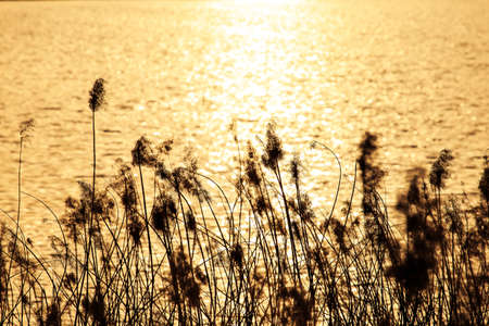 peacefulness: River reeds Stock Photo