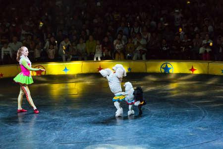 acrobatics: girl with dogs performing acrobatics