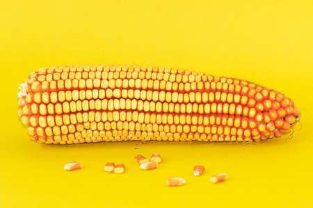 food photography: Yellow background shooting corn