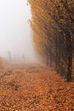 voyage: Un brouillard épais dans les bois Banque d'images