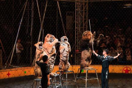 Circus Editorial