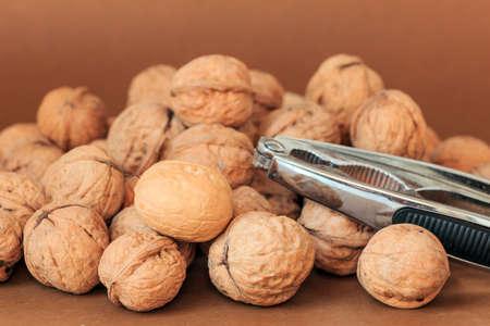 solid color: Solid color background of Walnut