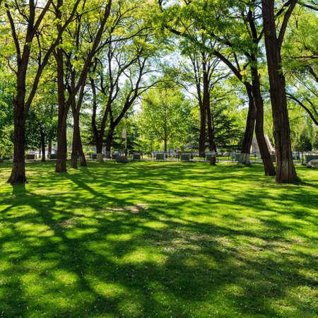 dense forest: Dense forest park