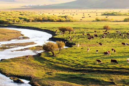 草地の景観 写真素材