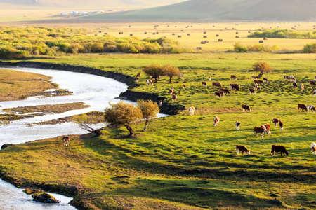 Landscape view of a grassland