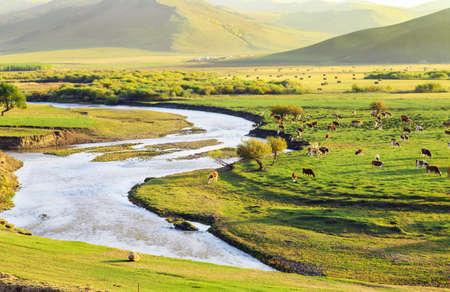 immobile: Landscape view of a grassland