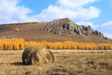 Autumn scenery Standard-Bild