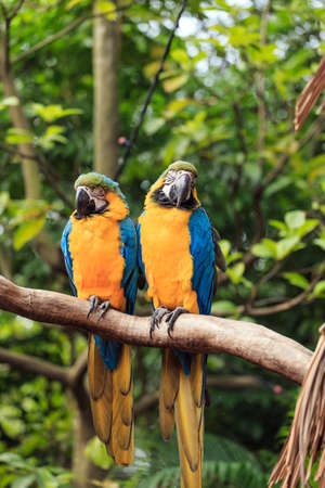 The blue and yellow macaw feather colors Stock Photo