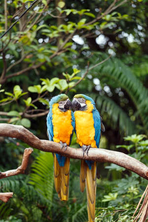 A pair of loving Parrots Stock Photo