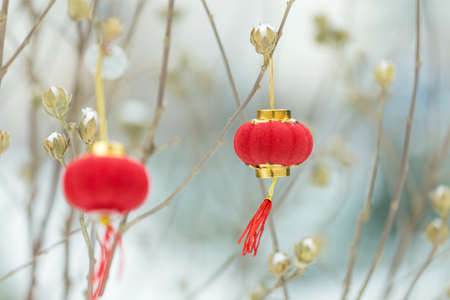 A red lantern hung on the tree branch Stock Photo