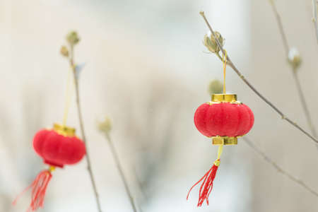 A red lantern hung on the tree branches