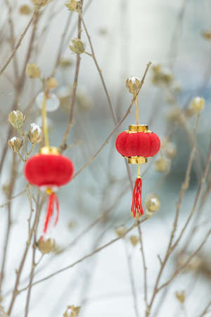 A red lantern hung on the branches