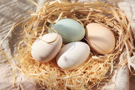 A variety of goose egg close-up