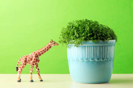 Green potted plant and animal model Stock Photo