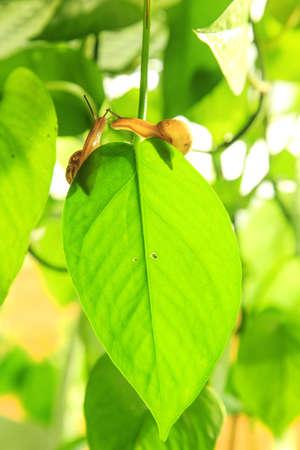 A lovely snail
