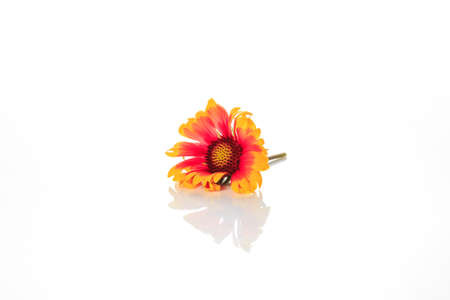 Flowers in a white background