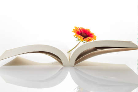 The flowers on the book