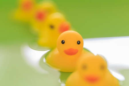 Toy duck in the bath