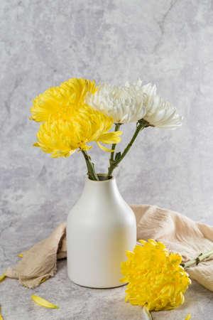 Beautiful blooming chrysanthemum Stock Photo