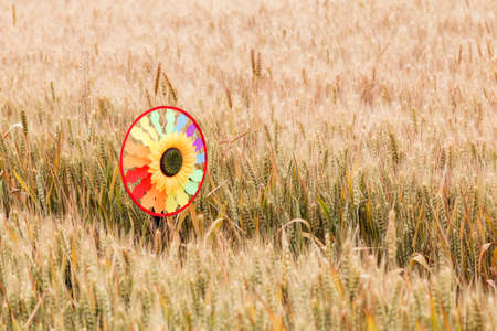 Toy windmill in the wheat field Banco de Imagens
