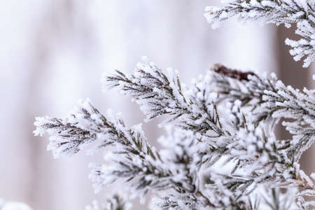 Winter frost covered plants