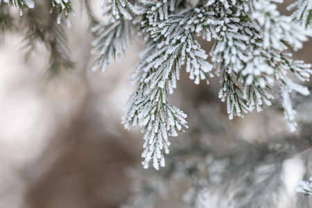 Plantas cubiertas de escarcha de invierno