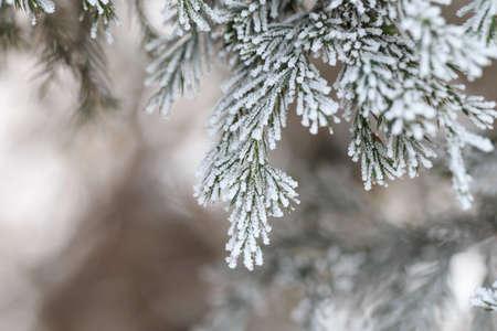 Zimowe rośliny pokryte mrozem