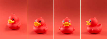 Cute toy duck