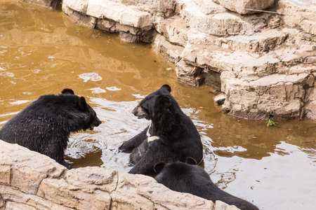 black bear in the zoo Standard-Bild