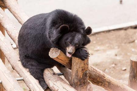 A black bear in the zoo Standard-Bild