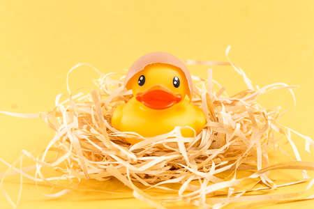A yellow duck in an eggshell Standard-Bild