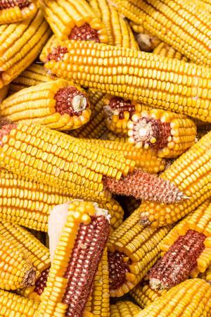 Corn harvested in autumn
