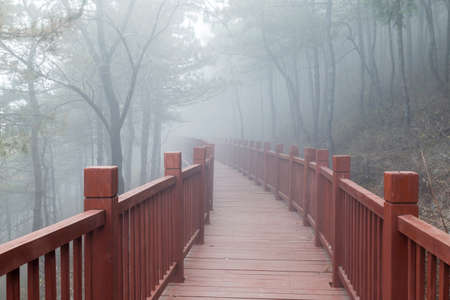 The wooden steps in the forest disappeared in thick fog Banco de Imagens