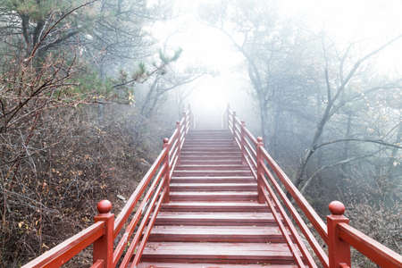 The wooden steps in the forest disappeared in thick fog Imagens