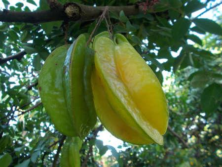 star: Star Fruit Stock Photo