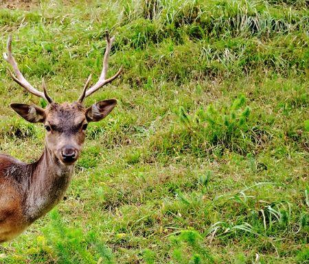 deer portrait photo