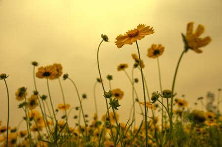 Wildflower: wildflower Stock Photo