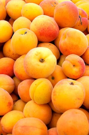 Organic and fresh apricots Stock Photo - 13920995