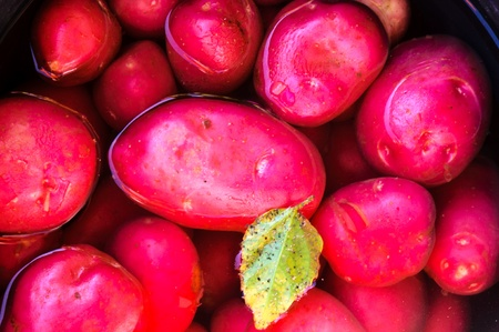 Red potato in the water photo