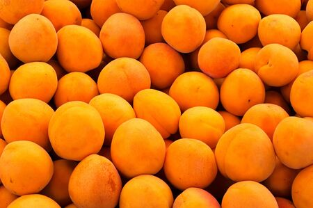 Real organic apricots in the full frame Stock Photo - 14283368