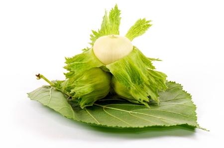 vernal: Green hazelnut on the leaf