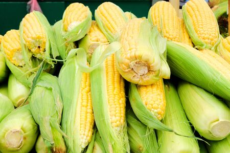 Fresh and raw corn in the market Stock Photo